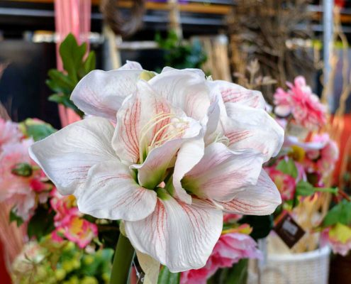 difficile dire se questo fiore è artificiale o naturale