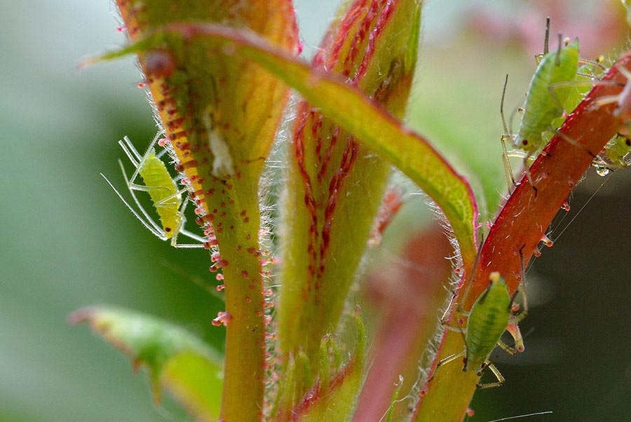 PPO prodotti fitosanitari per piante ornamentali