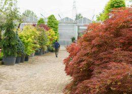 passeggiando fra le nostre piante da giardino