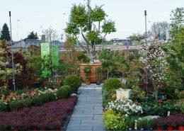 le nostre piante da esterno
