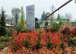 le piante ideali per le siepi da giardino