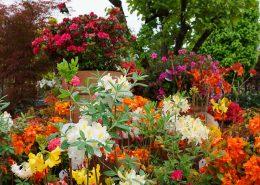 le piante da giardino non sono solo verdi