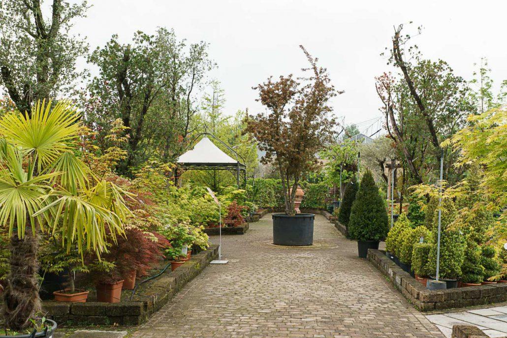 Piante da giardino e esterno garden roagna vivai cuneo for Piante da vivaio