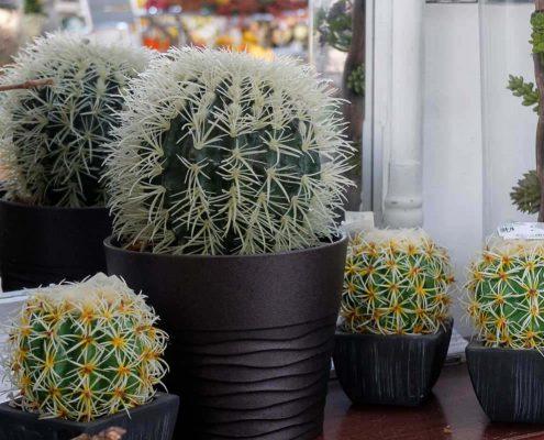 non solo piante fiorite ma anche piante grasse artificiali