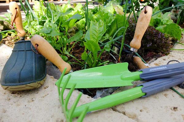 vendita ortaggi da piantare nell'orto