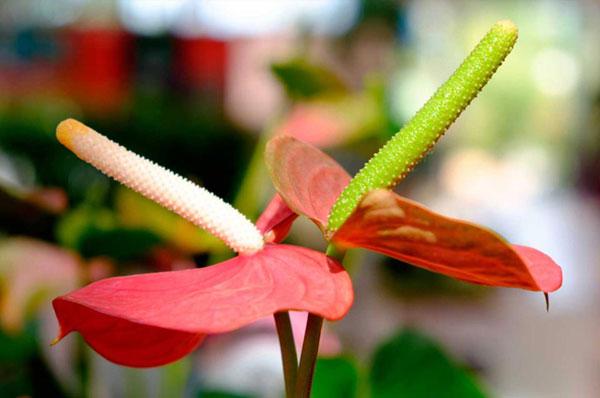 nella nostra serra troverai sicuramente la pianta o il fiore che cercavi