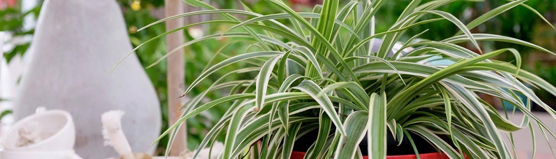 piante verdi e fiorite da interno