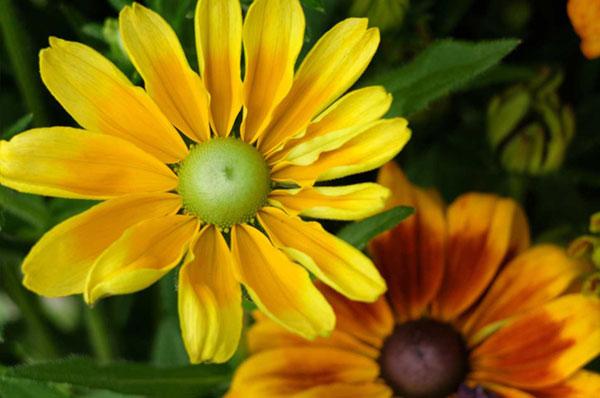 fiori per il terrazzo o il giardino