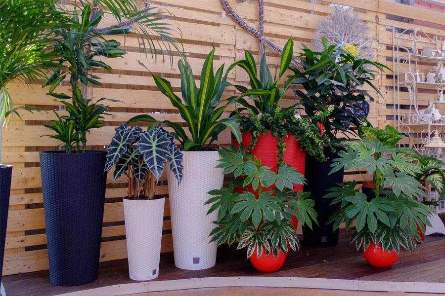 presso il nostro garden potrai trovare una grande varietà di piante da appartamento