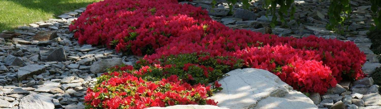 aiuole giardino con sassi e piante perenni