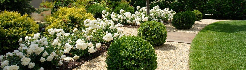 giardino con aiuola di rose bianche e camminamento in ghiaia colorata