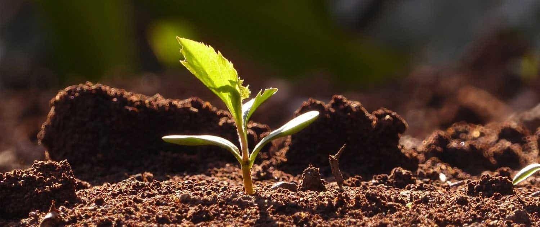 Presso il nostro garden troverete dal seme alla pianta ad alto fusto