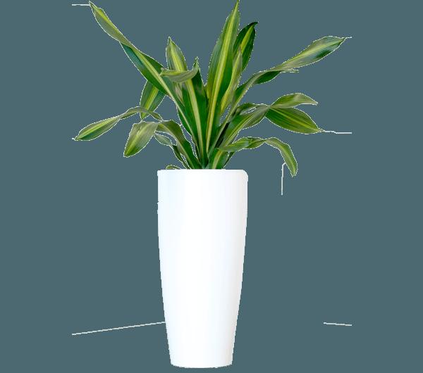i benefici delle piante da interno