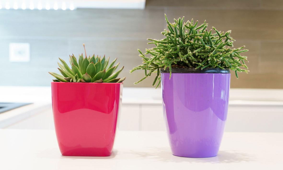 donare un tocco di colore alla casa con i vasi