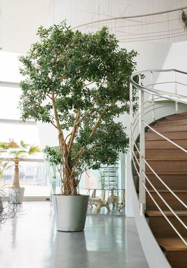 Vasi da esterno interno e giardino | Garden Roagna Vivai ...