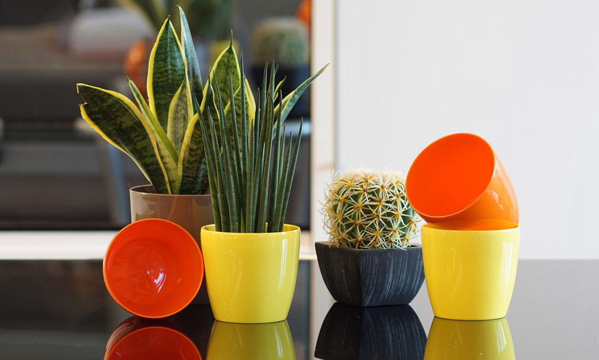 sembrano semplici vasetti in plastica colorata ma riescono a creare un ambiente allegro e gioioso
